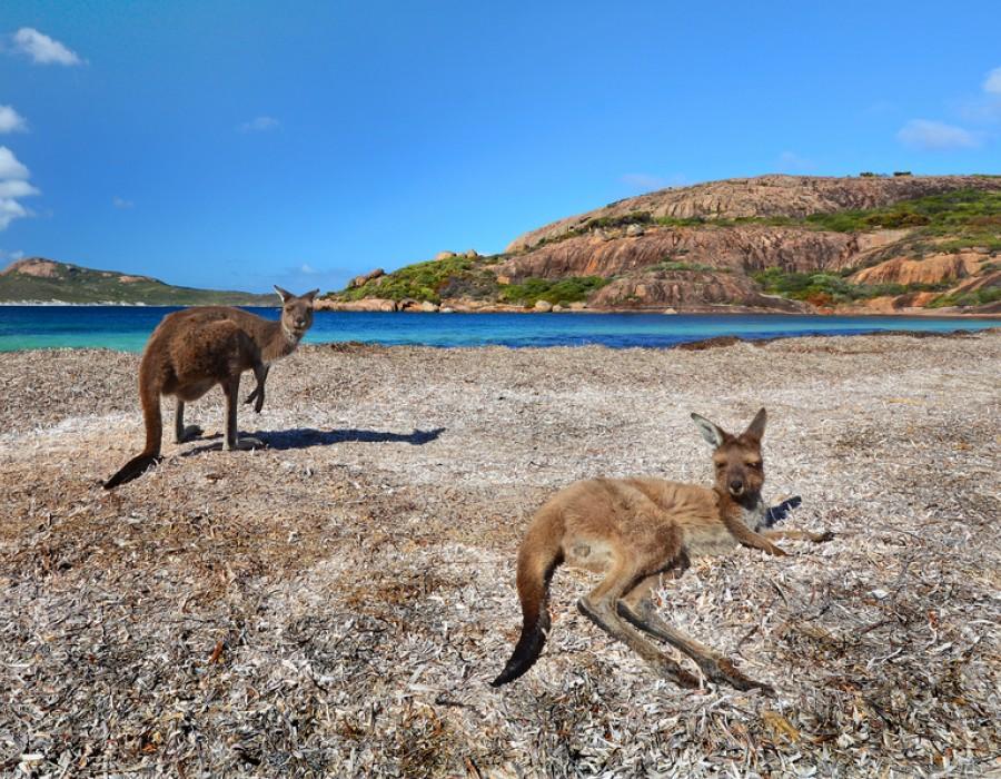 Tour Australia in Auto da Adelaide a Kangaroo Island