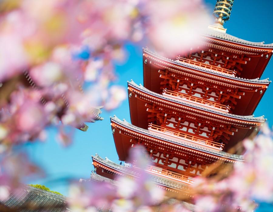 Tour Giappone Moderno e Classico