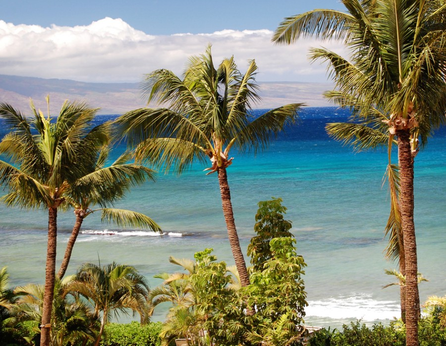 Estensione Mare Hyatt Regency Maui Resort & Spa
