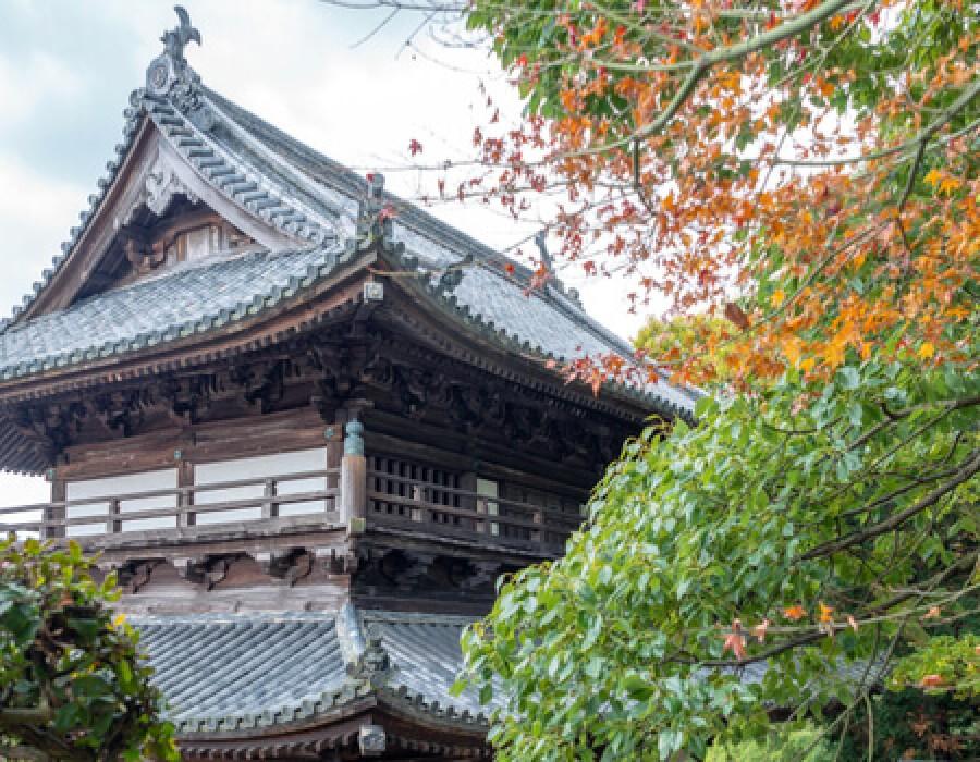 Alla scoperta dello Shikoku